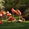 pavane-echappee